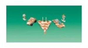 Hasbro MILITARY BASIS 5-PACK SORTIMENT 46650185