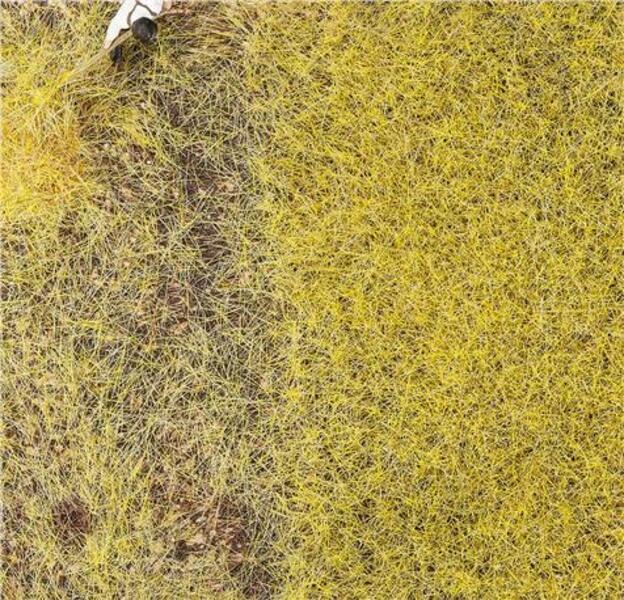 FALLER PREMIUM Streufasern Stroh, 6 mm, 30g 1170776