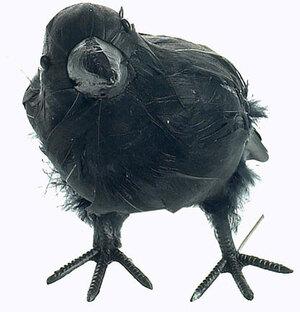 KOERNER Rabe mit echten Federn schwarz, 18 cm 84210141