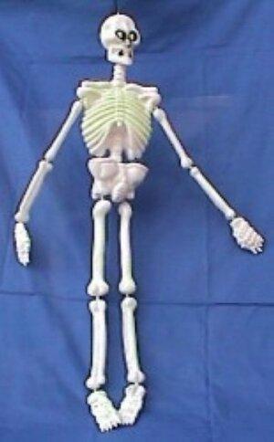 Skelett Nachtleuchtend 90cm 72825005600